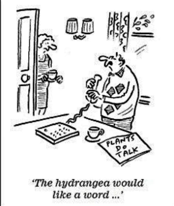 Cartoon about  hydrangeas.