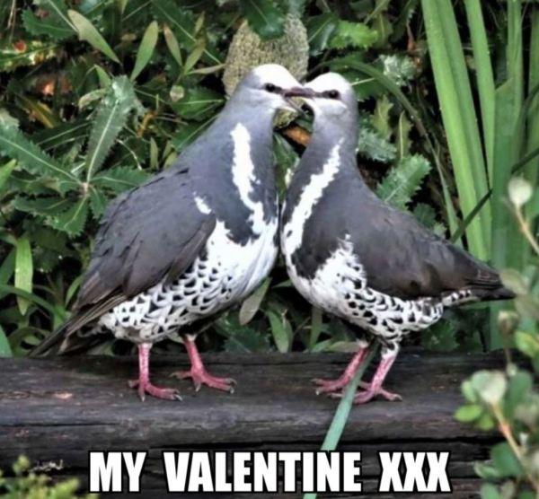 Mr Wonga and his Valentine