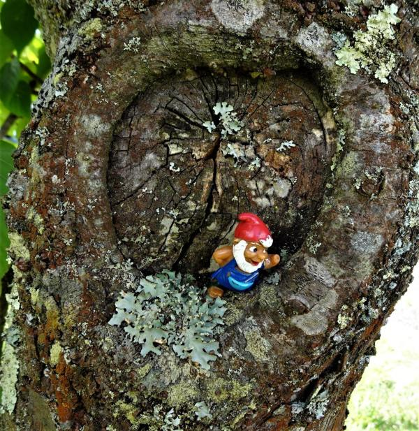 Ageless gnome in one of the cherry trees.