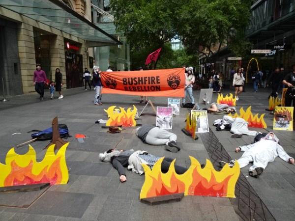 Koala protest in Sydney's Pitt Street.