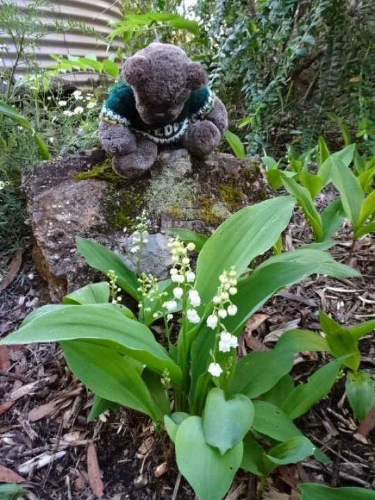 Editor Des  loves lily-of-the-valley.