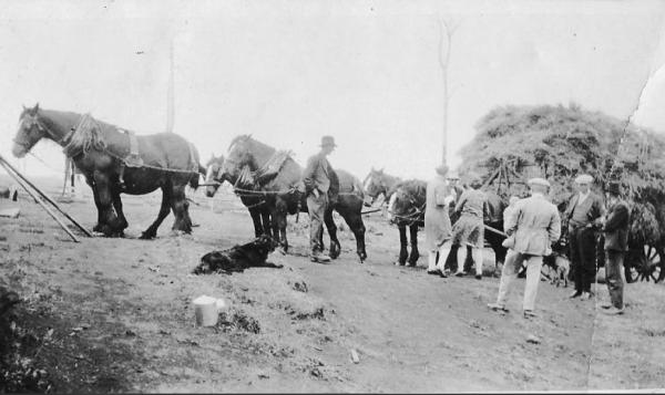 Women providing lunch to harvesters at Preston, Tasmania,