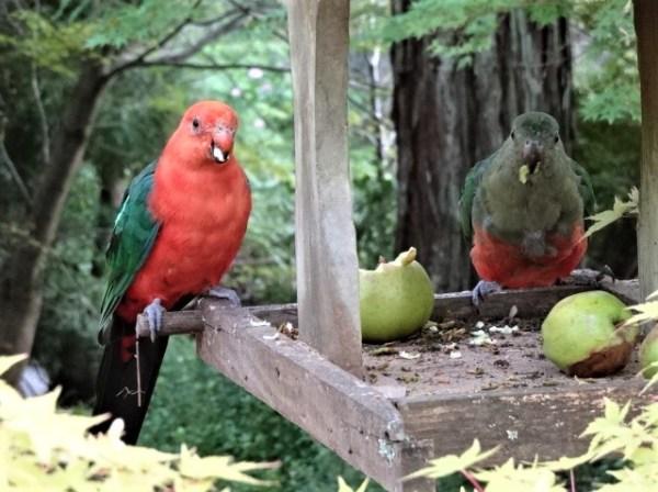 These birds are silenced due to beaks full of muesli breakfast apple.