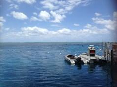 Snorkelling on Agincourt Reef