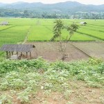 rizière chiang dao
