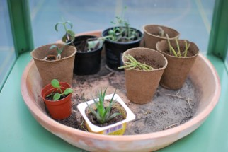 Plantenasiel Kleine plantjes