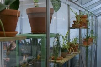 Plantenasiel planten
