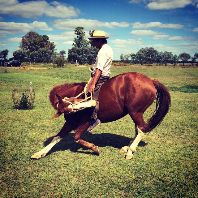 Gaucho Marting showing his skills with the horse