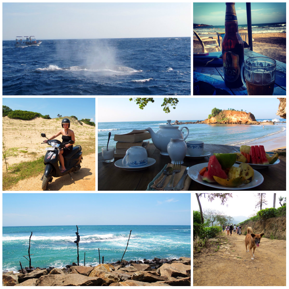 Super Guide to Sri Lanka + Itinerary: Beach, National Parks