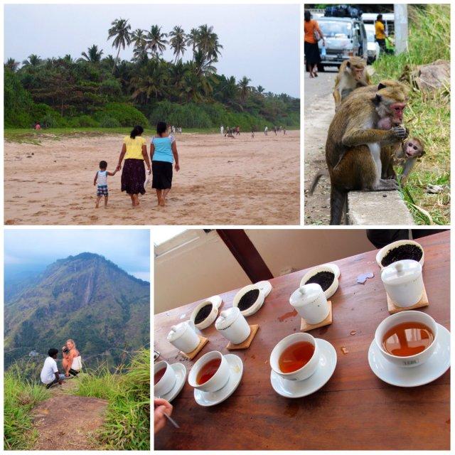 Where to go in Sri Lanka in Ella