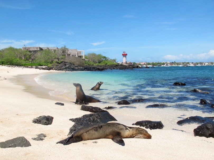 6 Questions about Galápagos - 1. How expansive was it?