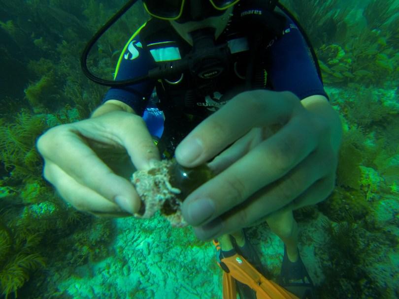 Road Trip in the Keys requires KeyDives - Diving