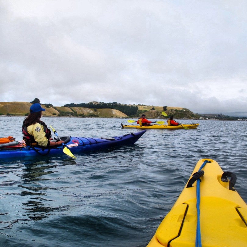 7 Great places to visit in New Zealand - Kaikoura Whale watching or sea kayaking