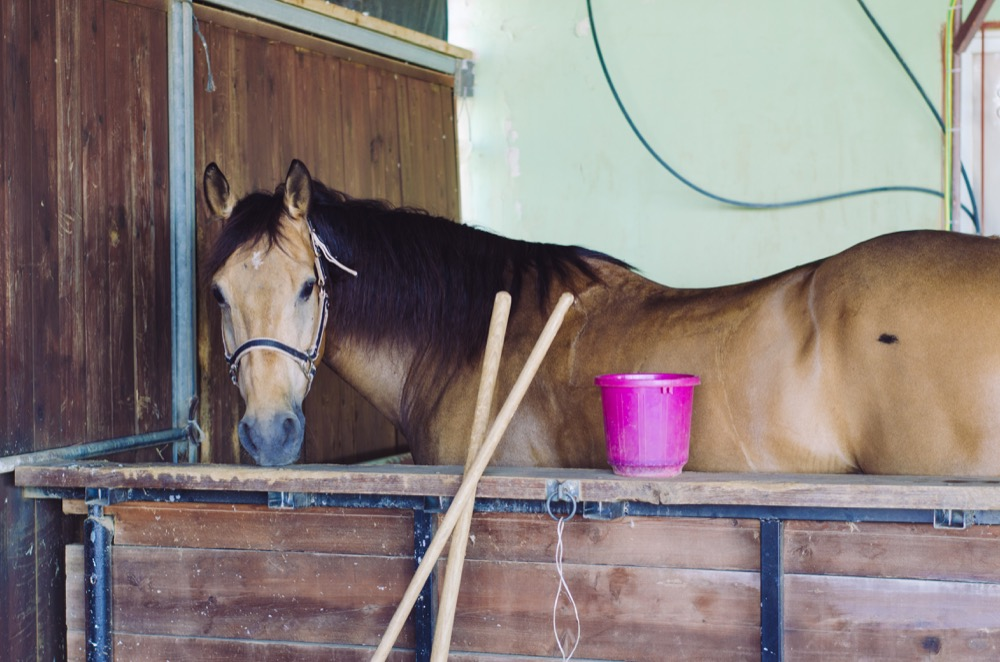 The reluctant horse