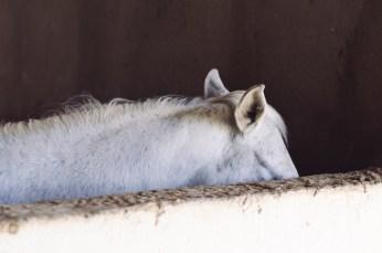 White ears 2