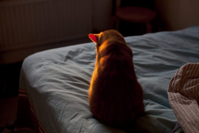 Cat by Celine Marchbank