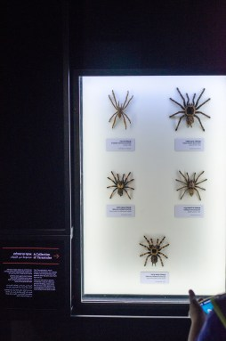 We visited the Steinhardt Museum of Natural History today. It opened fairly recently, and it's well worth the visit if you're interested in natural history, generally, and Israeli ecology, in particular.