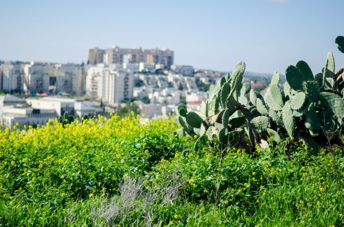 Photos from our hike up to Givat HaTitora