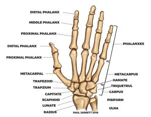 Hand Therapy Awareness Week 2018 | Dr Paul Jarrett, Hand