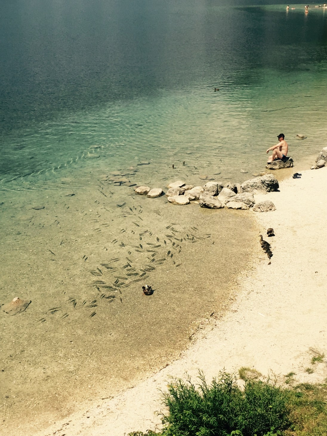Fish, ducks and swimmer, Lake Bohinj, Triglav National Park