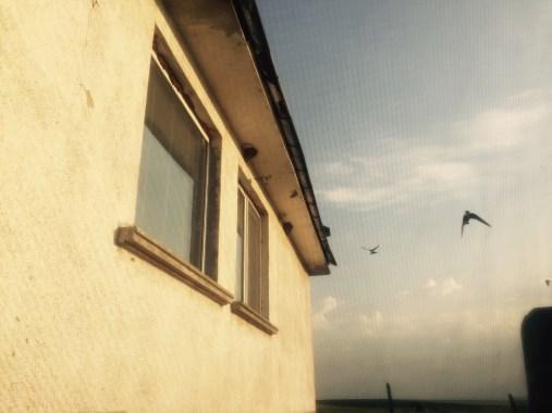 Nesting swallows, Bulgaria
