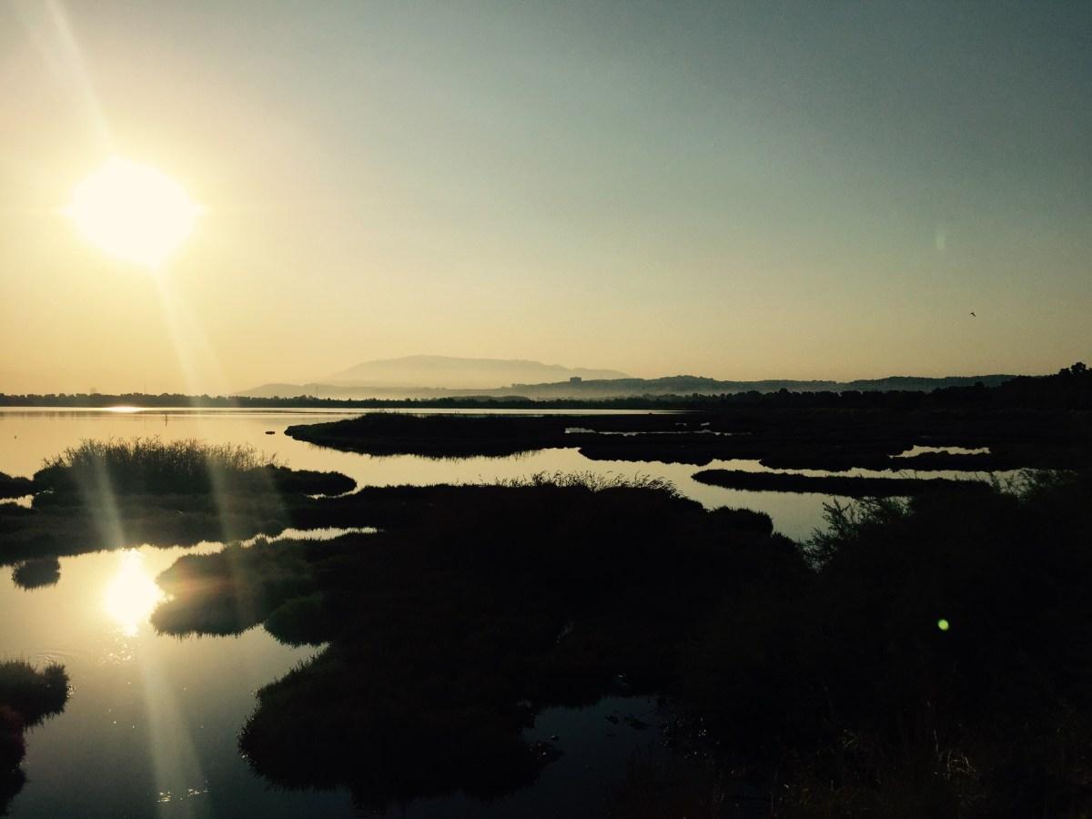Saltwater marshes, Izmir Turkey