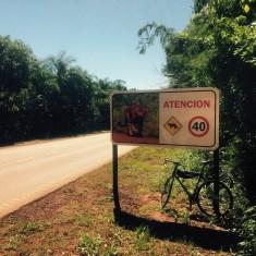 Warning, Jaguars, Argentina