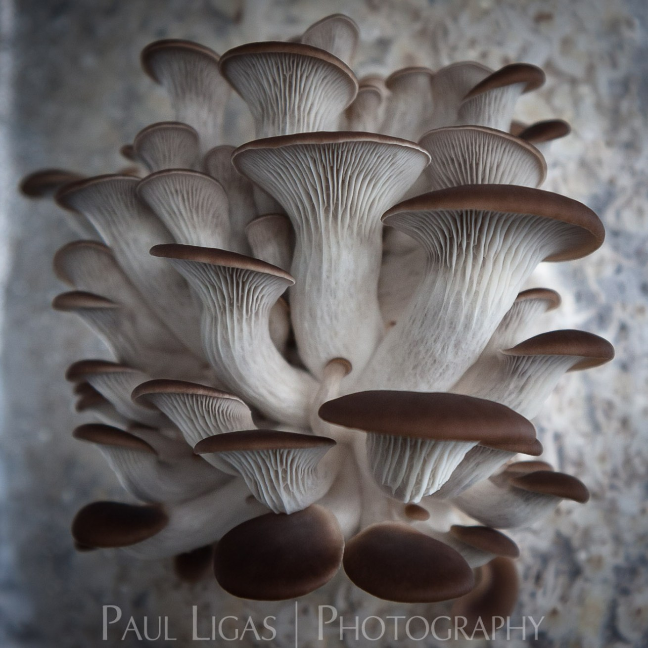 Mushrooms, agriculture photographer photography farming herefordshire 3034