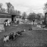 Life On The Farm, documentary photography, farming, agriculture photographer herefordshire 2948