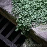 Drain, Bristol, fine art photographer urban photography herefordshire 0485