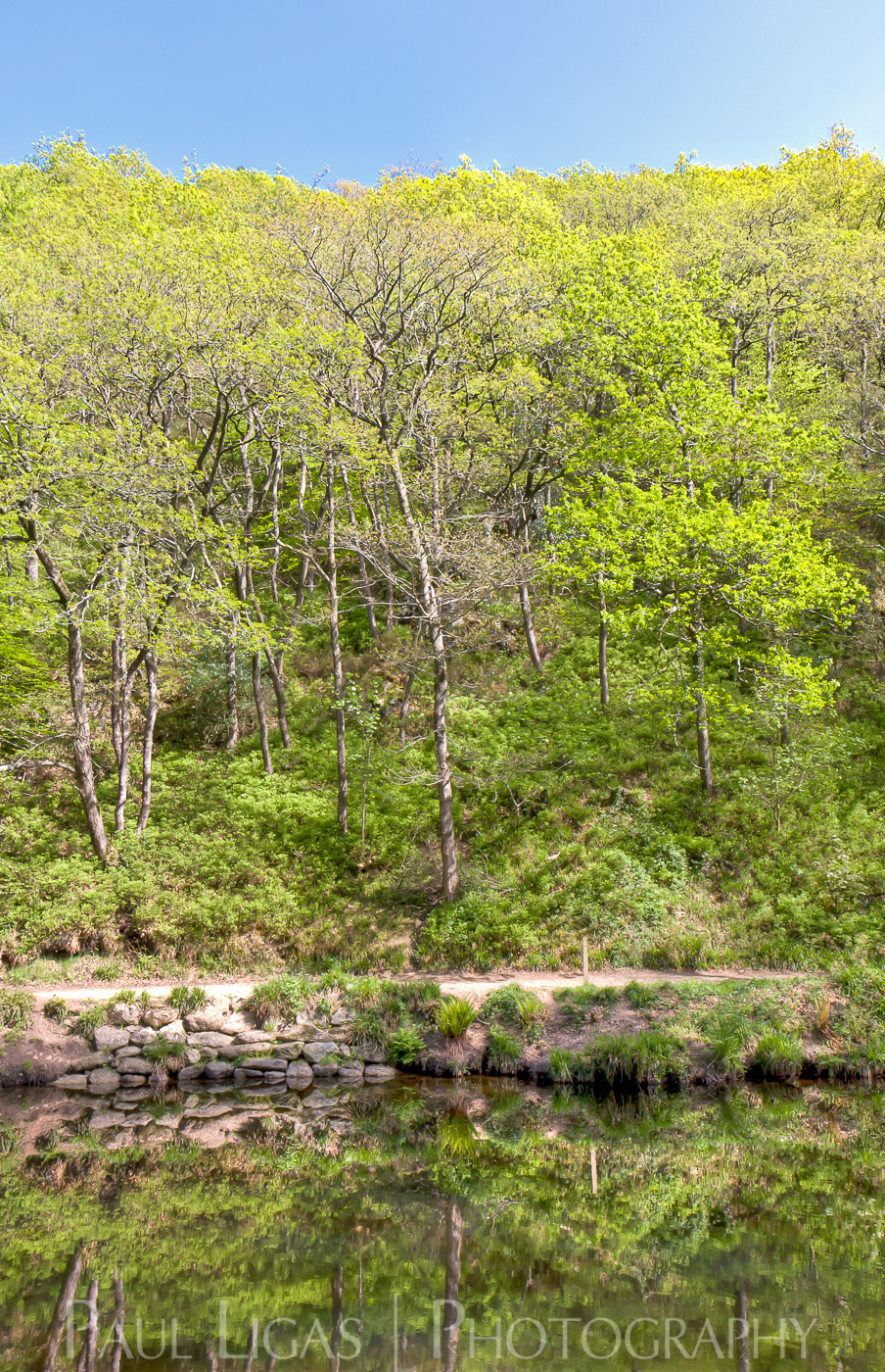 Teign Valley in Spring, nature photographer herefordshire photography landscape 4001