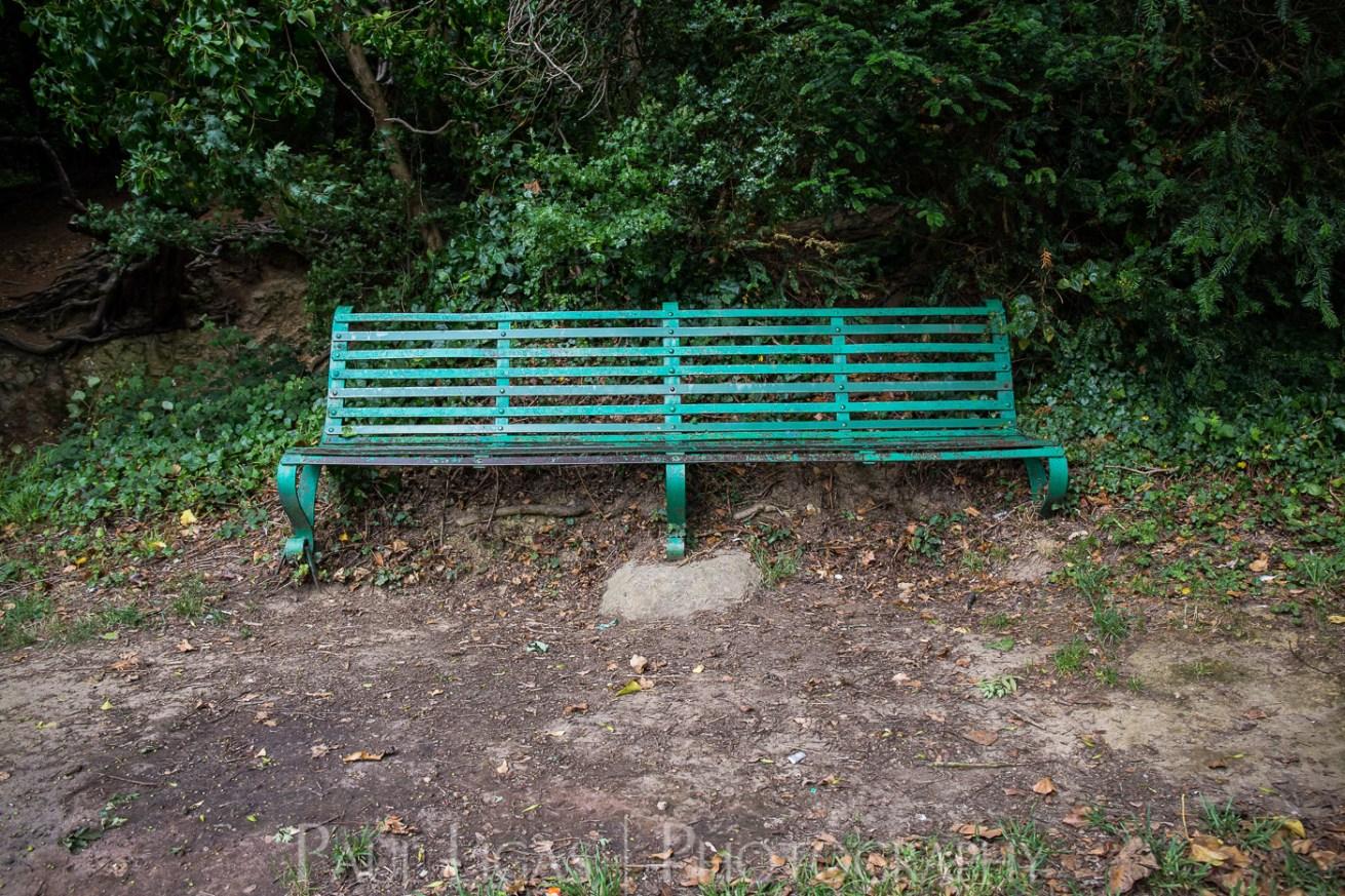 Dog Hill Wood, Ledbury, Herefordshire in Summer nature photographer photography landscape 0686