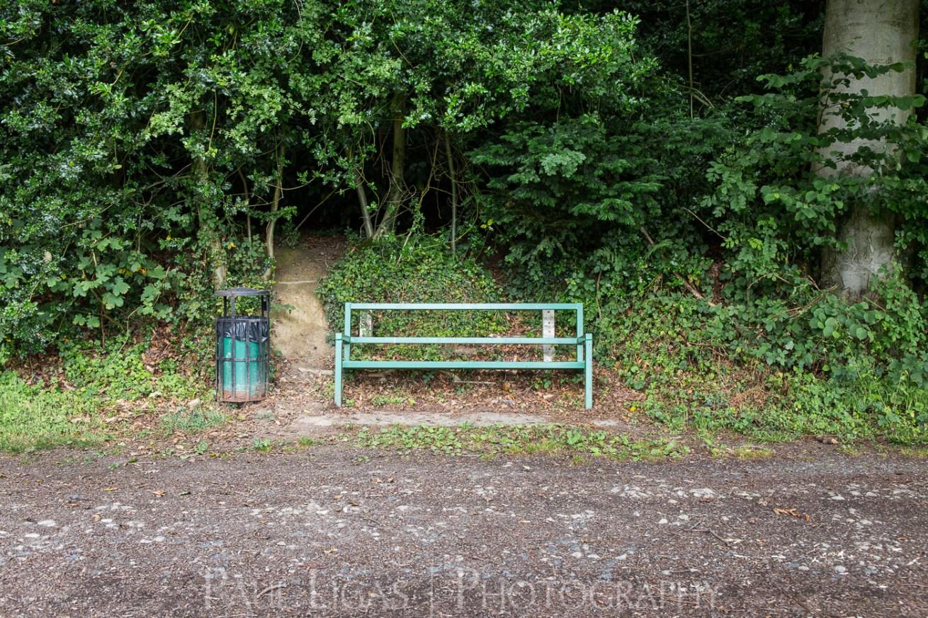 Dog Hill Wood, Ledbury, Herefordshire in Summer nature photographer photography landscape 0688
