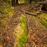 Dog Hill Wood, Ledbury, Herefordshire in Autumn nature photographer photography landscape 2645