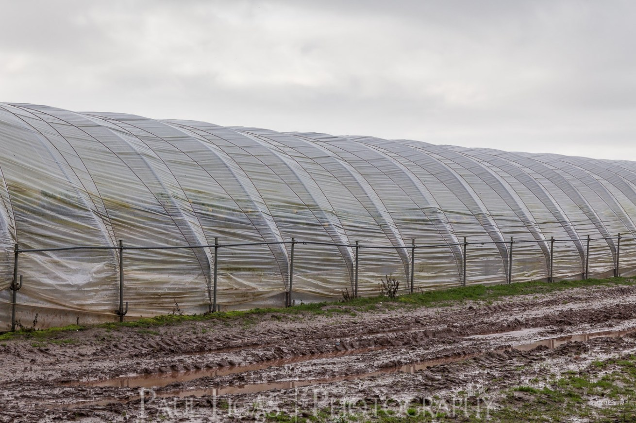 General Public, Ledbury, Herefordshire farming agriculture photographer photography polytunnel 4321