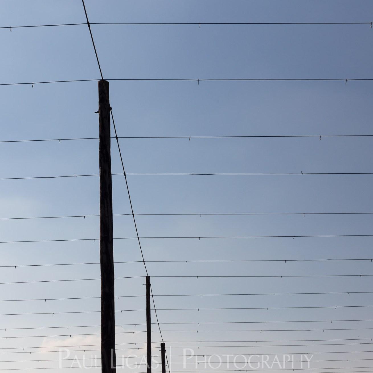 General Public, Ledbury, Herefordshire farming agriculture photographer photography The Hop Project hop wires landscape 1787