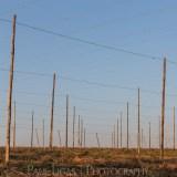 General Public, Ledbury, Herefordshire farming agriculture photographer photography The Hop Project hop wires landscape 1872