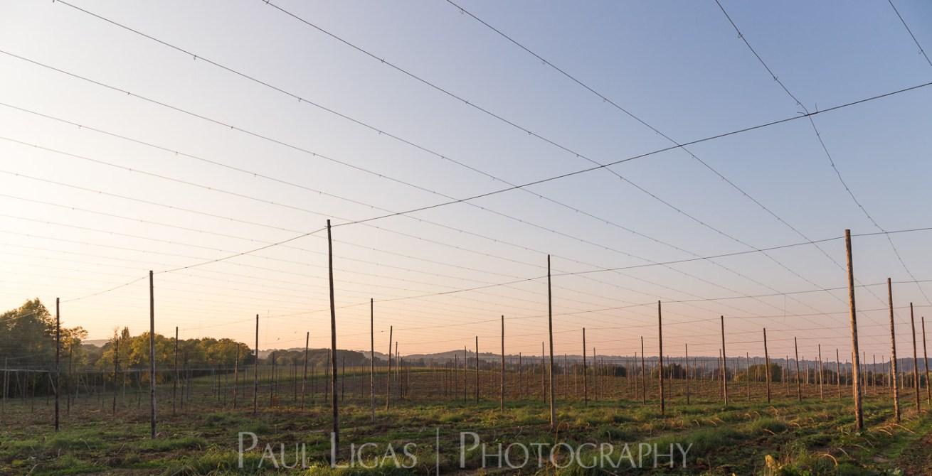 General Public, Ledbury, Herefordshire farming agriculture photographer landscape photography hops 1908
