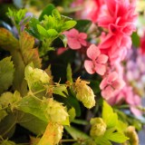The Hop Garland, Bosbury, Herefordshire product photographer photography 5184