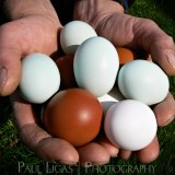 Mill House Farm product agriculture photographer photography farming eggs herefordshire 0010