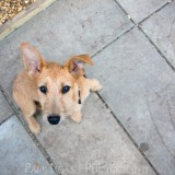 Poppy, Animal and Pet photographer Photography herefordshire 0426