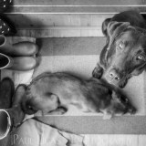 Waiting, Animal and Pet photographer Photography herefordshire 8903