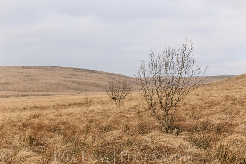 Elan Valley, Wales landscape nature photographer photography herefordshire 3149