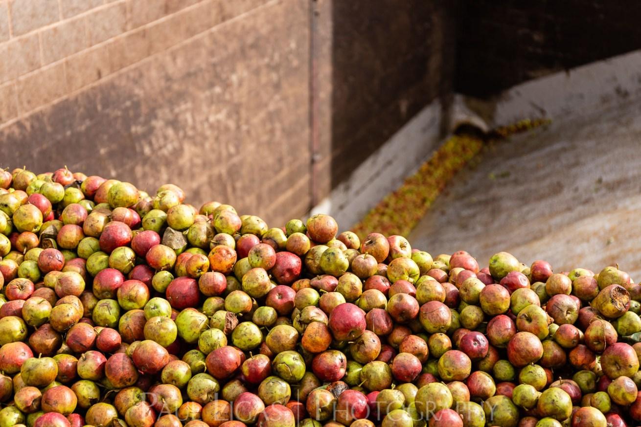 Westons Cider Apples Farming Photographer Herefordshire Ledbury Agriculture 3647