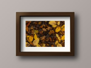 Paul Ligas Photography Print Autumn Leaves mockup