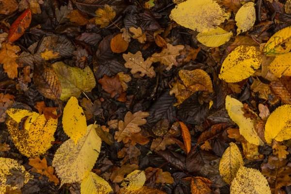 Paul Ligas Photography Print Autumn Leaves