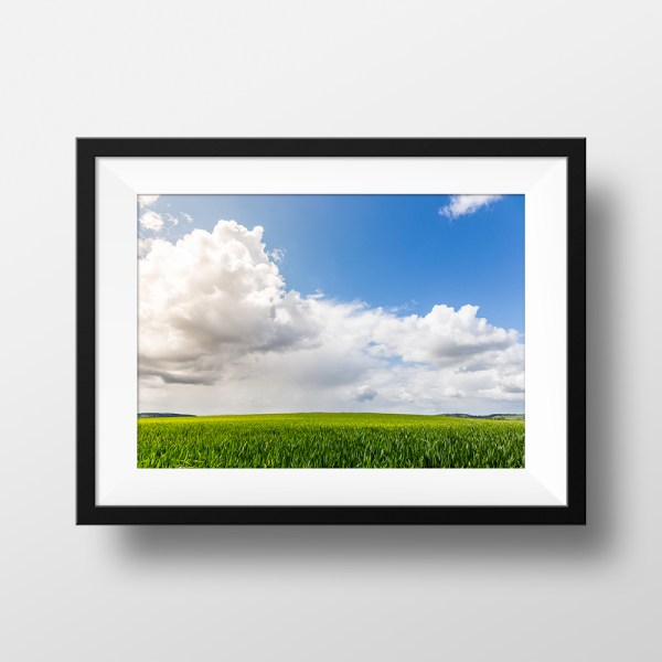 Paul Ligas Photography Print Early Summer Wheat Field mock up