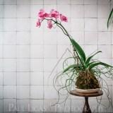 Spiffy Daisy plants kokedama product lifestyle photographer photography Herefordshire-7299