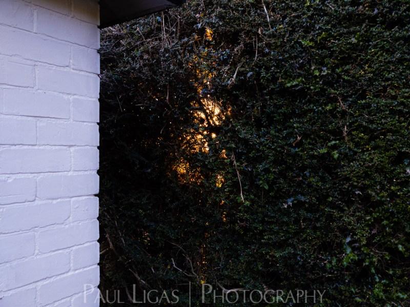 photos from inside a lockdown part 13 paul ligas photography hereford ledbury-205741
