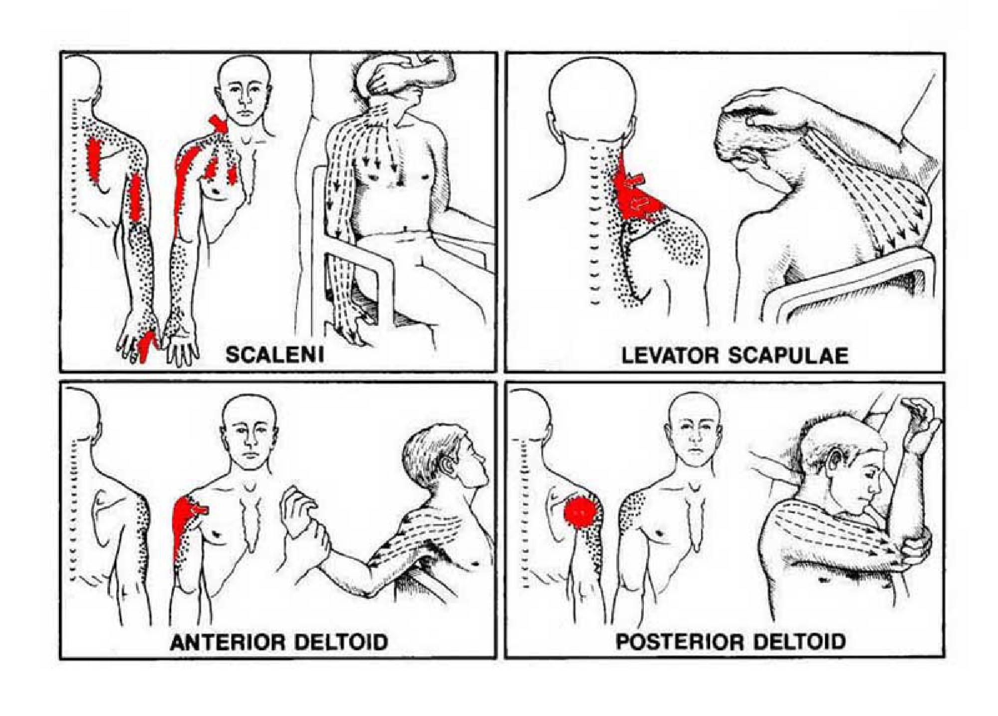 Paul Manley Treatment For Back Pain Neck Pain Musicians